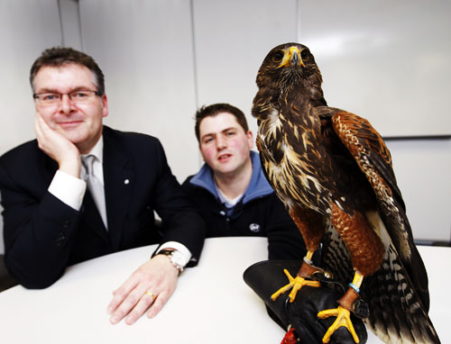 Maximus the hawk with handler Marcus Giusti and Sean McAuliffe of ISS Facility Services.