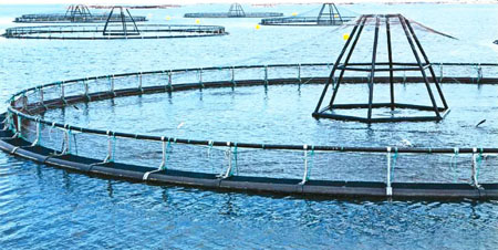 Galway Bay fish farming project