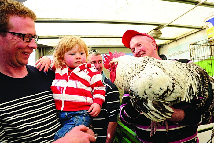 Isaac and his father Andrew meet farmer Joe's rooster at at The Woodquay Market as part of The Galway Food Festival. Photo: Boyd Challenger