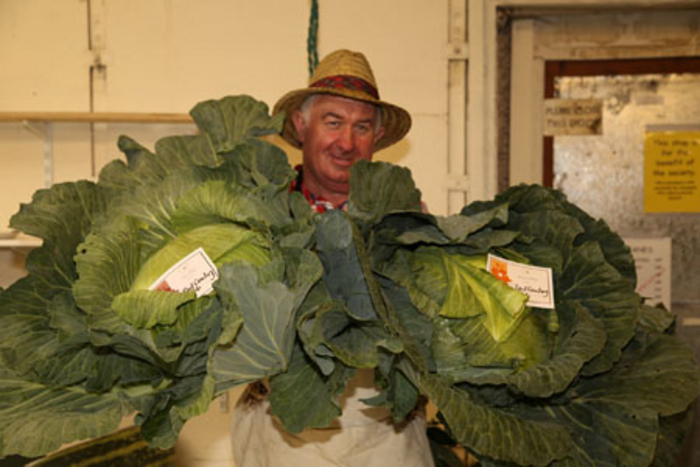 Paul Cawley with his prize winning cabbages. Photo: Tony Gribben.