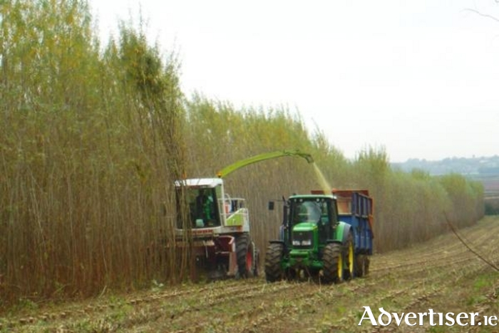 Willow harvesting