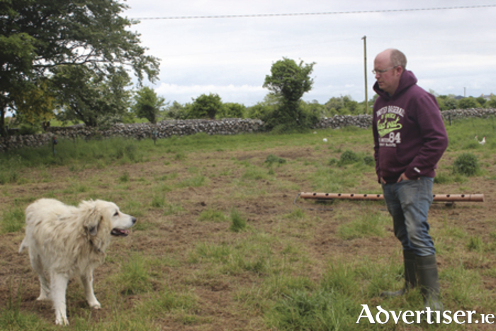 Ronan Byrne, aka the Friendly Farmer, with Bess the Pyrenean mountain dog.