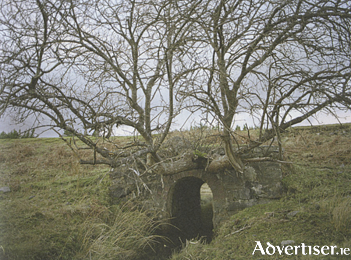 Strange landscape: Trees grow from an old railway bridge on the now disused Clifden line.