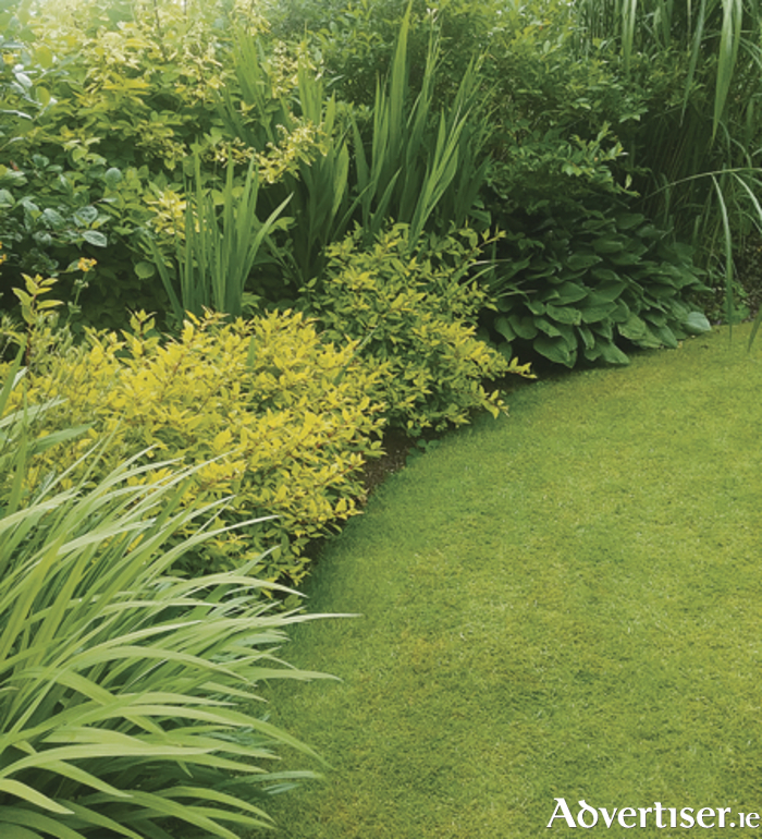 Contrasting foliage shapes form the backdrop to a curved lawn