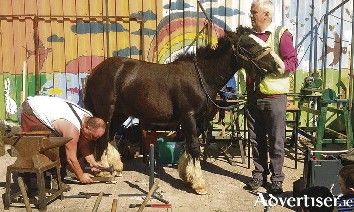 Joe Dodd shoeing a horse in the Ballinfoile Mór Community Organic Garden.