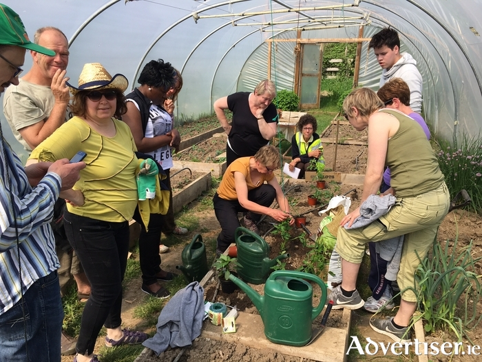 Community Garden To Become Social Health Environmental And Learning Hub