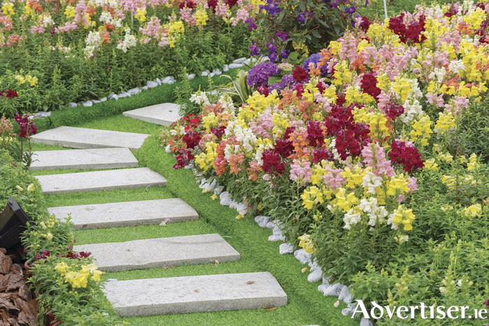 get your dream garden this summer - Dream Garden