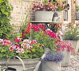 Don't allow compost in containers to dry out