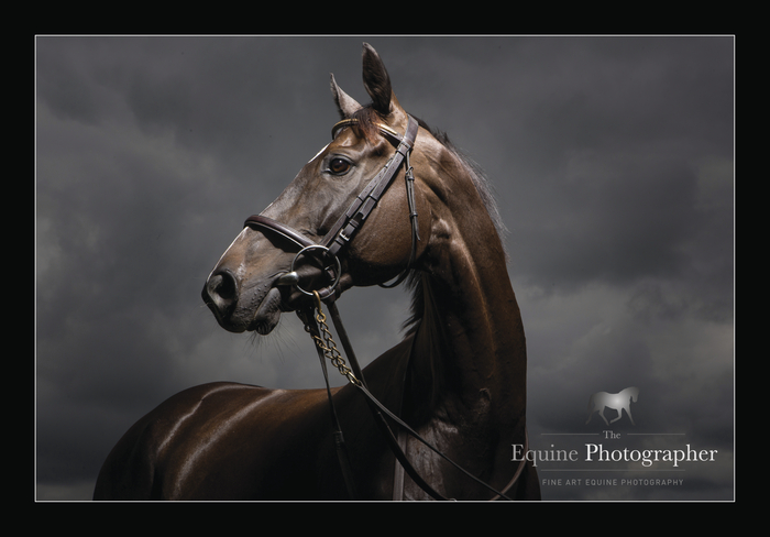 Stunning picture of Clondaw Warrior — by the super-talented Martina Regan.