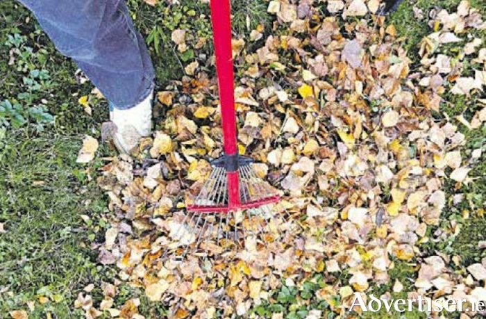 Get rid of last years leaves which could be harbouring pests