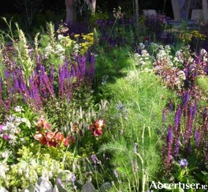 Apply organic matter now for healthy blooms this summer