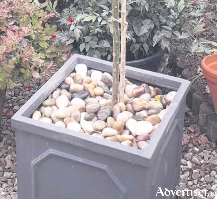 These polished cobbles from Galway Stone make a smart mulch for containers.
