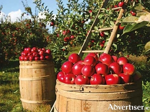 Try before you buy to grow apples you love