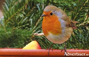 Ground feeders such as the robin prefer a flat surface to a hanging feeder.