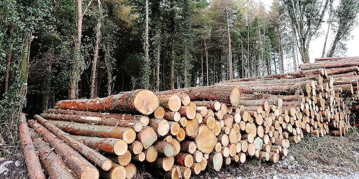 Photo: Forestry.ie
