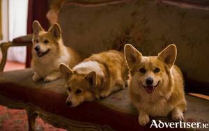 One does love one's corgis.
