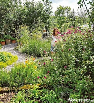 A wide range of plants growing happily together in the Burren Perfumery Herb Garden