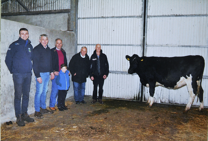 Pictured with the heifer from left; Tony Sweeney and Patrick Sweeney, Henry Sammon and his grandson Conor, Willie Feeney and Joe Moylette. Missing from the photo Padraig Joyce. Photo: John Moylette.