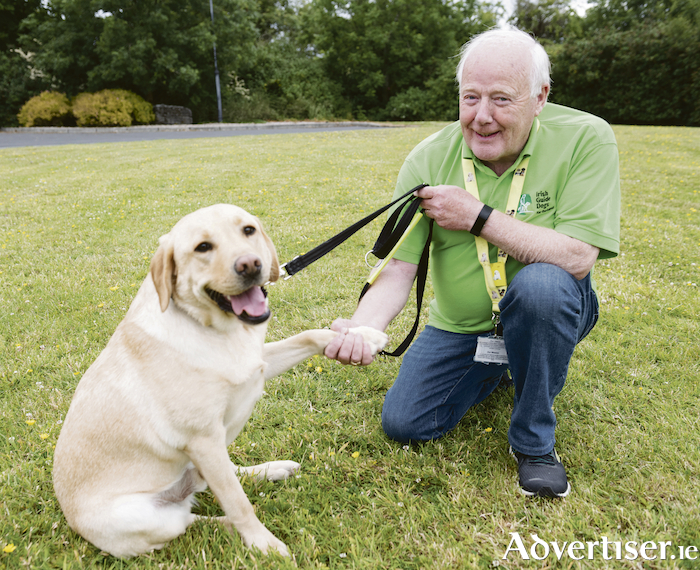 18 month-old Zander is now an ambassador for The Irish Guide Dogs and Assistance Dogs charity. Here he is greeting Frank Downes, Chairman of the Galway Branch of the Charity. Photo:Andrew Downes