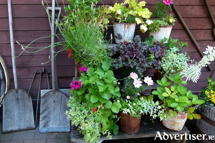 Look after potted plants first when water is scarce