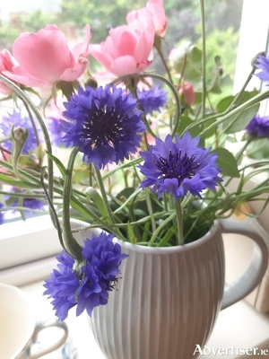 Cornflowers are perfect candidates for a wildflower meadow and are good for cutting too