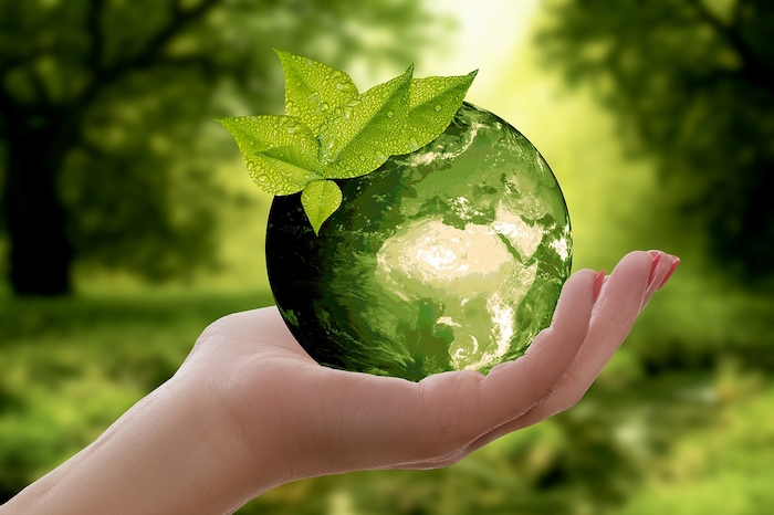 Sustainability Green Environment
